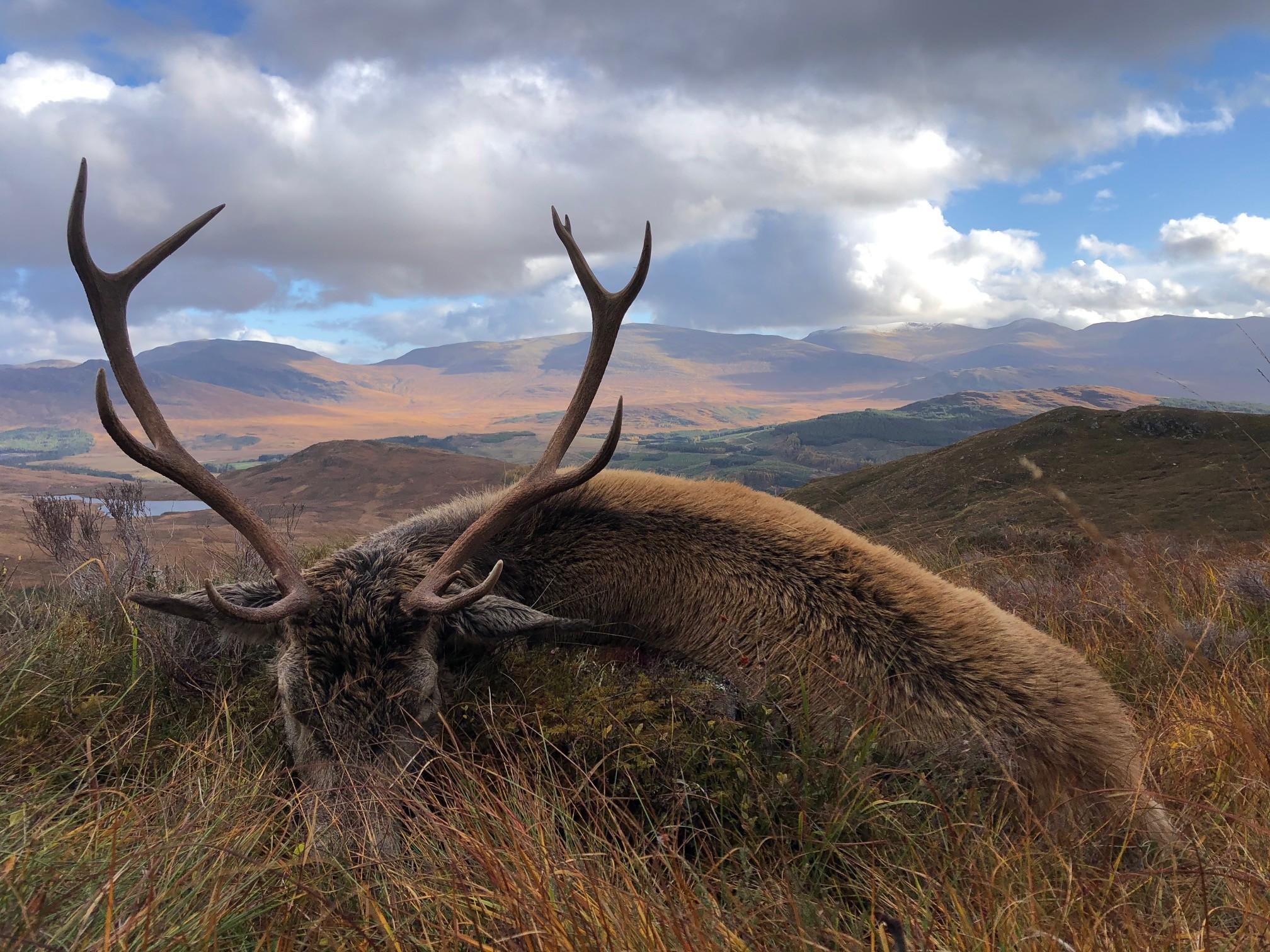 Red Stalking Scottish Adventure